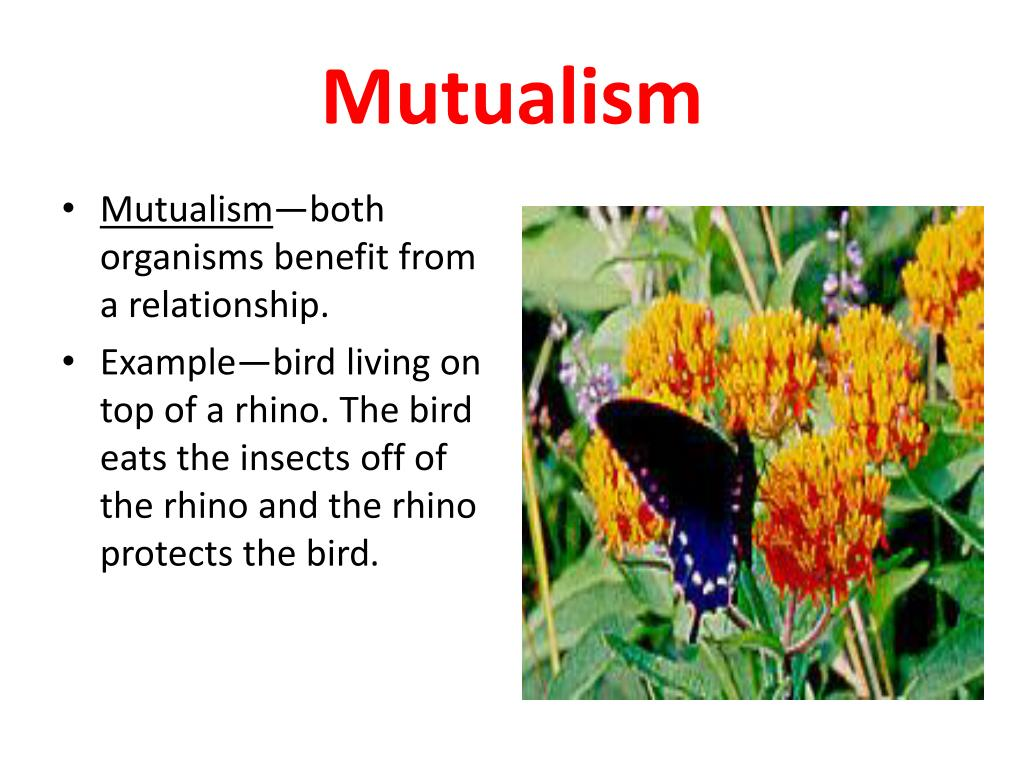 example of mutualism in biology