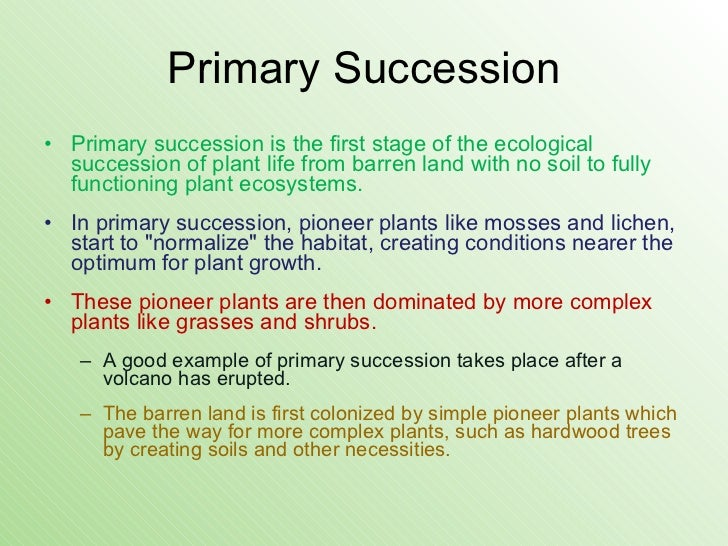 what is an example of primary succession